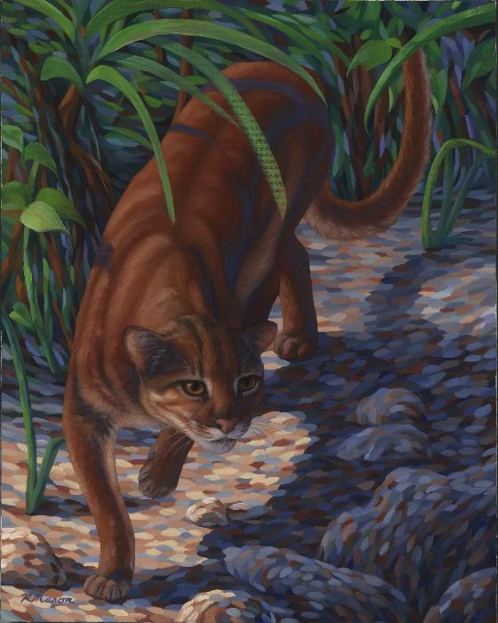 Bornean bay cat painting by Rochelle Mason