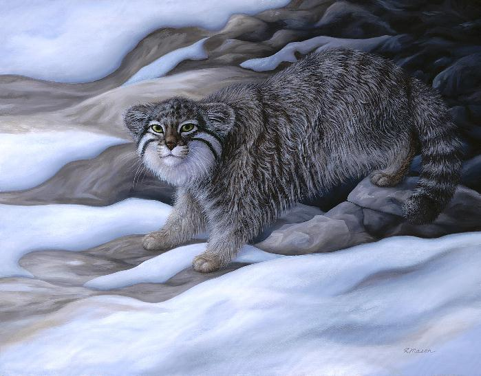 Pallas' cat painting by Rochelle Mason