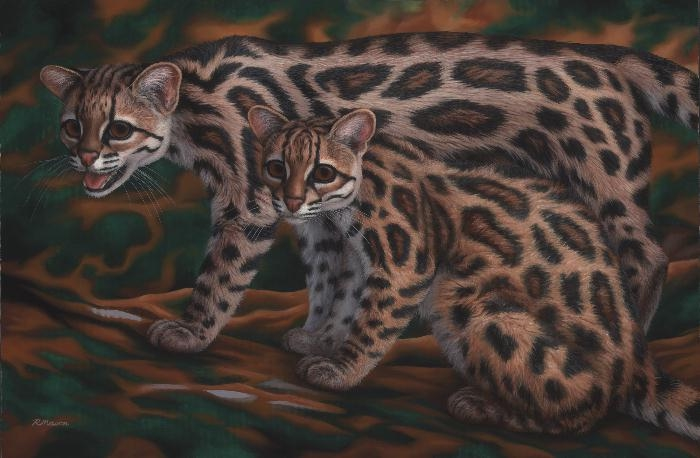 Margays painting by Rochelle Mason